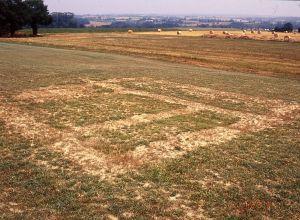 Augan (56). Villa du Binio. Visualisation des murs d'un es batiments de la villa sur herbe rase. Cliché M. Gautier