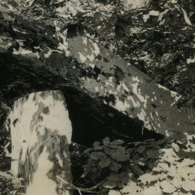 Allée couverte du Bois de Gouarec